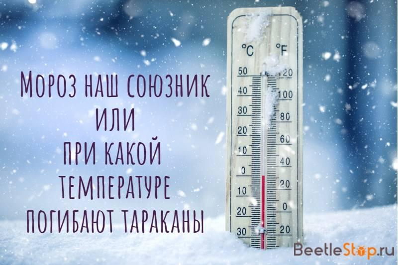 При какой температуре погибают тараканы мороз и солнце
