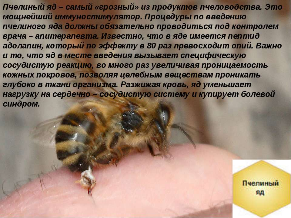 Как лечат артроз с помощью пчел - нолтрекс.