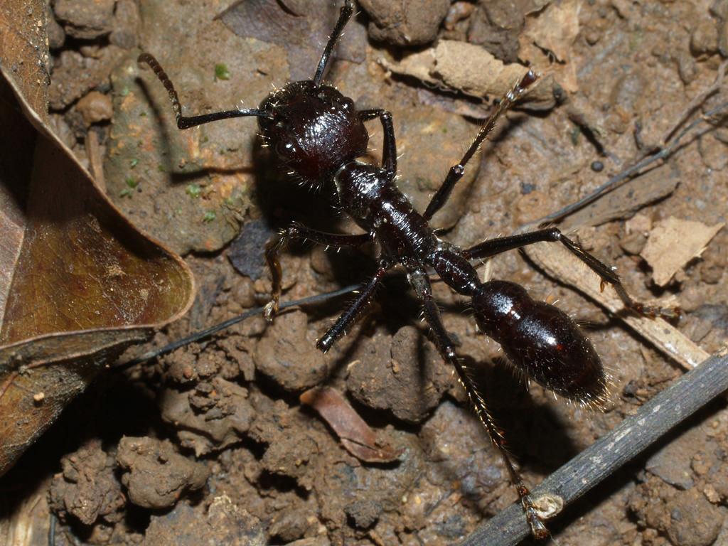 Виды муравьев: описание, образ жизни и ареал распространения