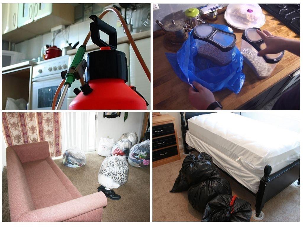 Как избавиться от блох в квартире самостоятельно: эффективные средства