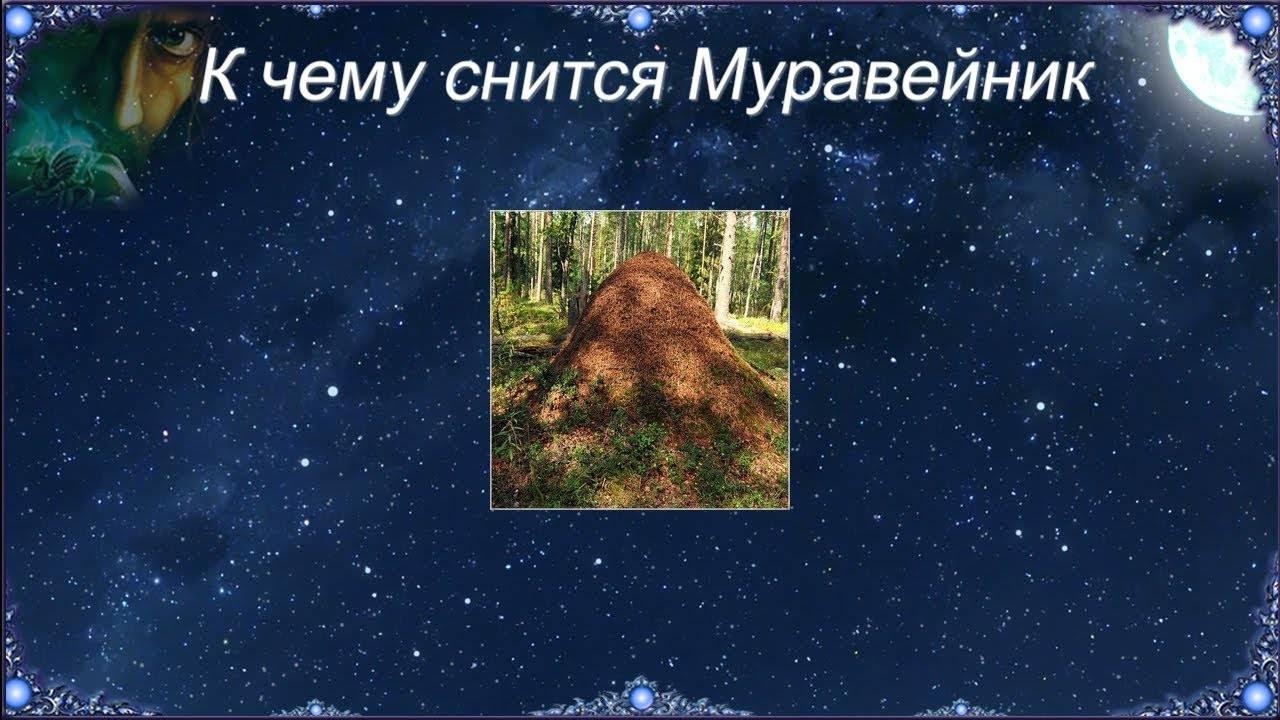 К чему снятся муравьи во сне женщине - сонник большие, много муравьев в доме, квартире