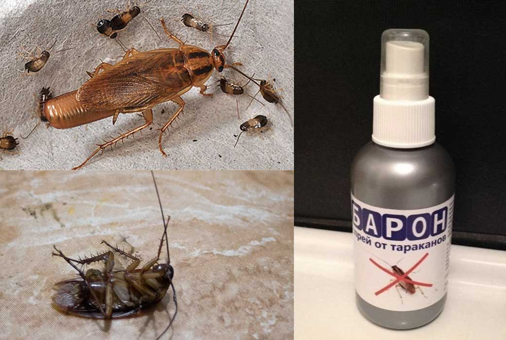 Какое самое эффективное средство от тараканов?