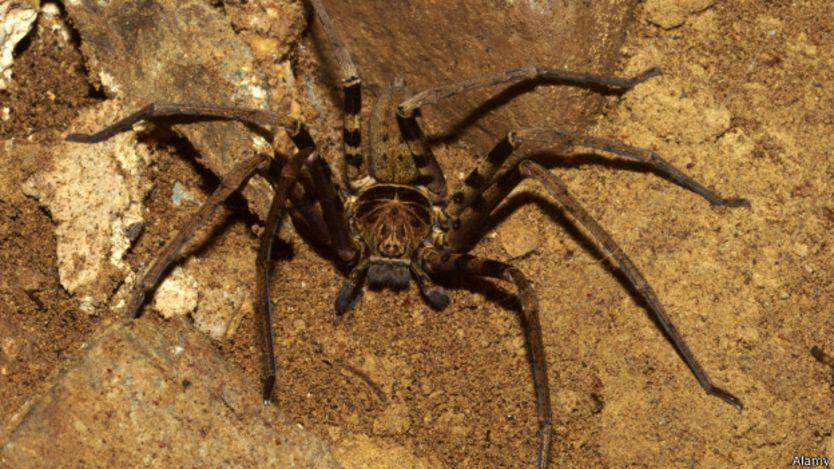 Самые большие пауки в мире — топ10
