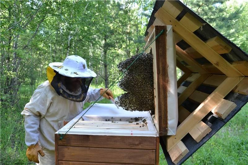 Способы самостоятельного уничтожения пчел