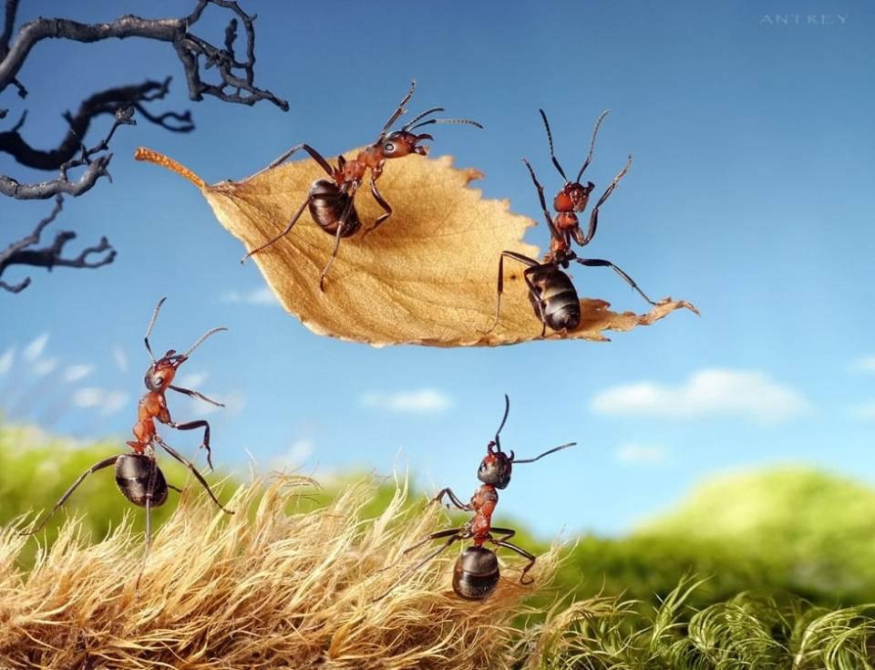 Муравьи в доме – как избавиться от муравьев в доме