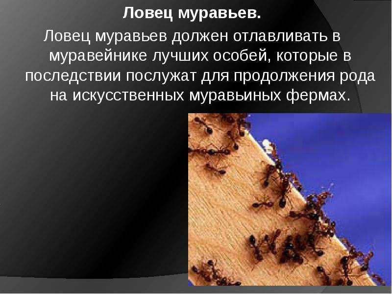 К чему снится муравьи. видеть во сне муравьи - сонник дома солнца