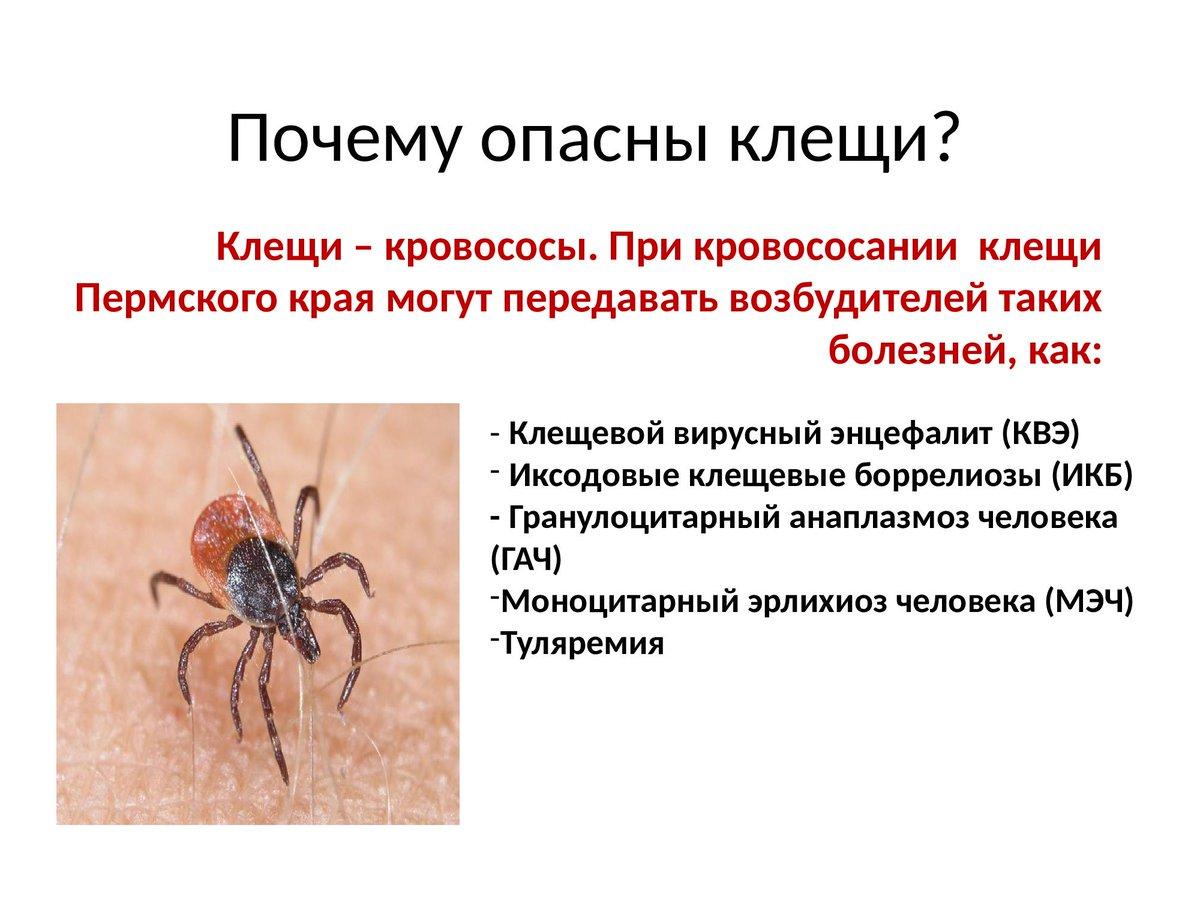 Клещи в крыму в 2021 году: есть ли энцефалитные