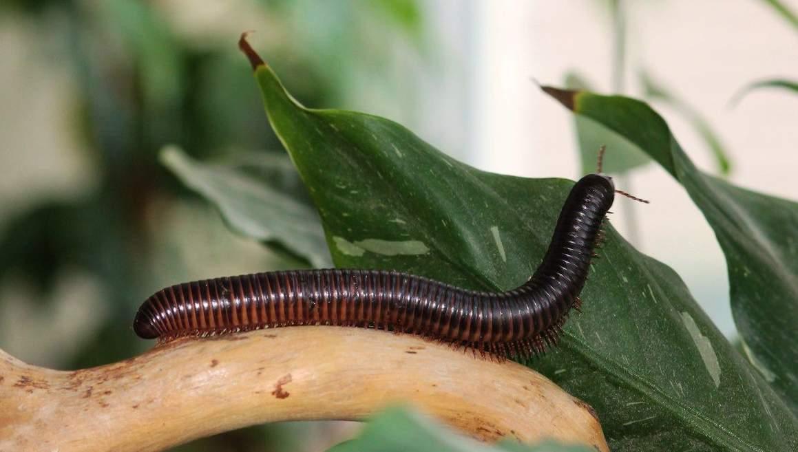 В ванной и туалете завелись насекомые: быстро бегают, головастики