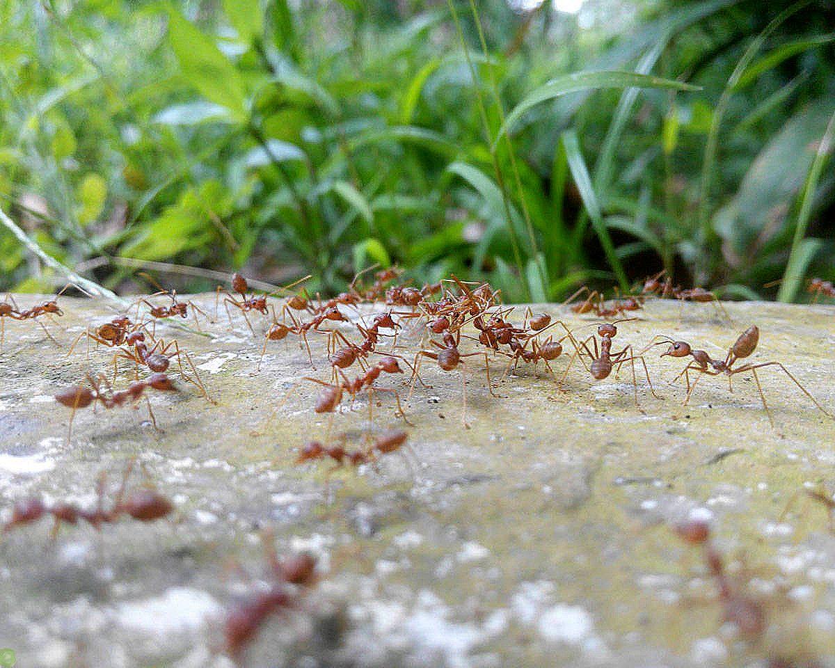 Как избавиться от муравьев в частном доме: народные средства