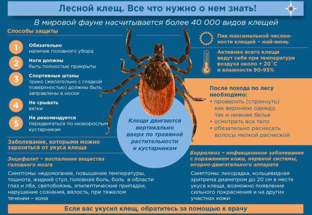 Клещевой энцефалит: симптомы и лечение заболевания нервной системы