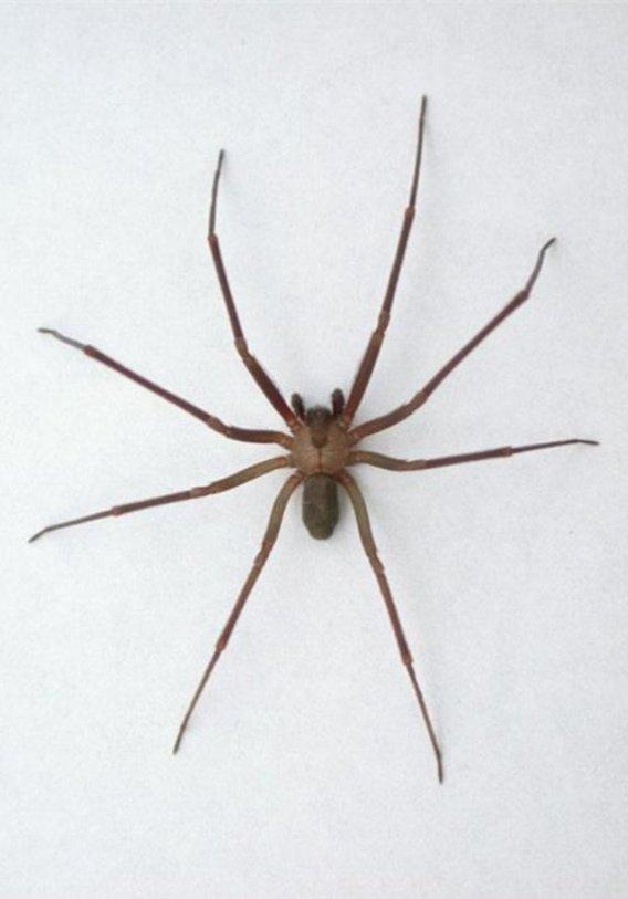 Что делать при укусе паука
