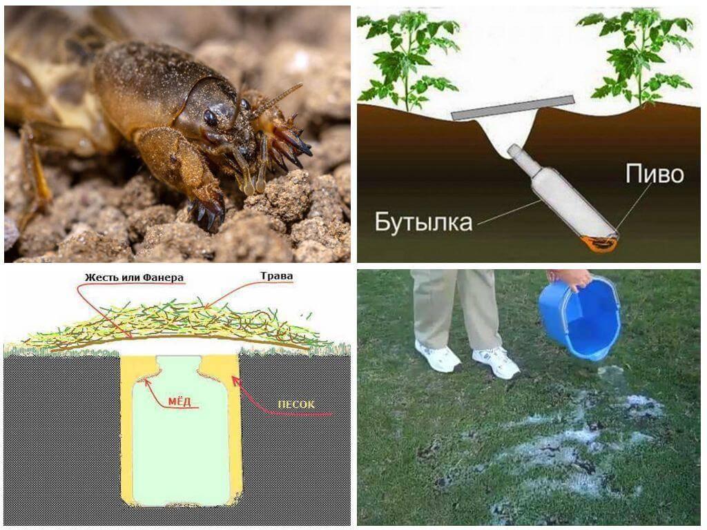 Как избавиться от кузнечиков в огороде. химические и народные средства от сверчков