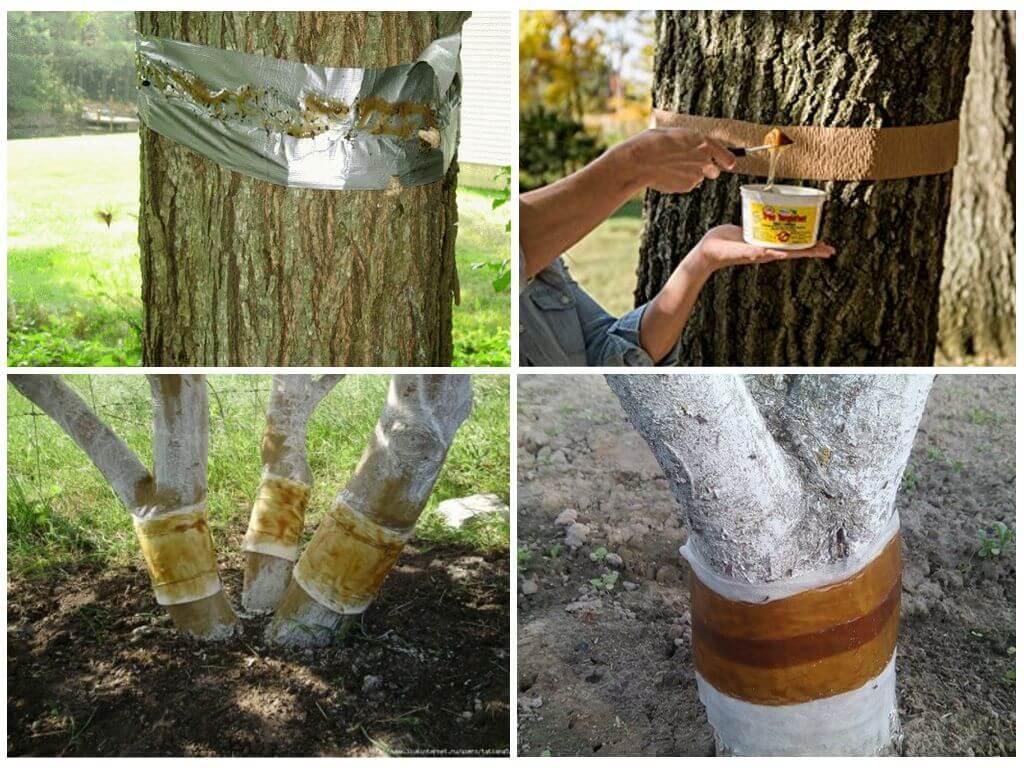 Как избавиться от муравьев на яблоне препаратами и народными средствами