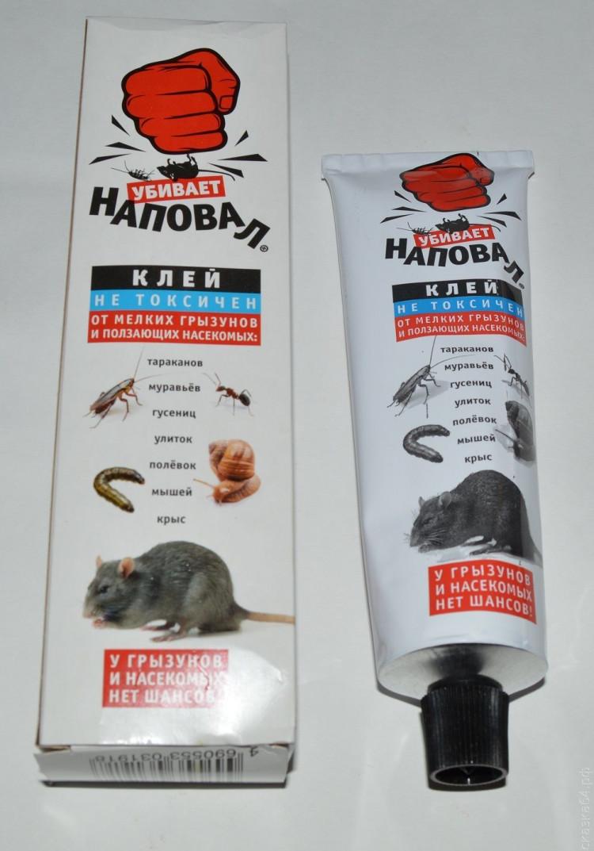 Приманка для мышей в мышеловку: топ – 7 продуктов, привлекающих грызунов