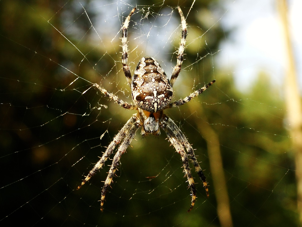 Виды домашних пауков – фото, названия и описания