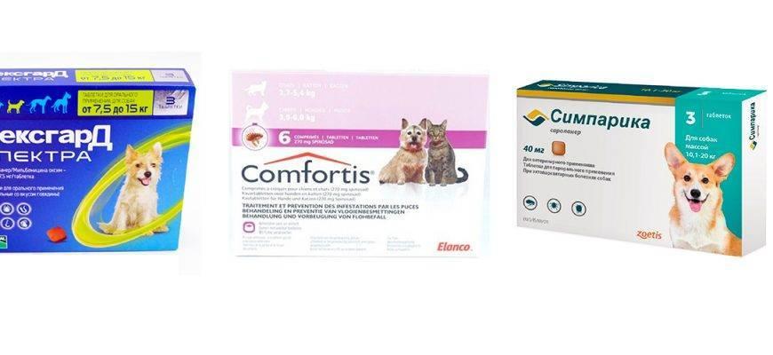 Выбираем таблетки от блох для домашних питомцев
