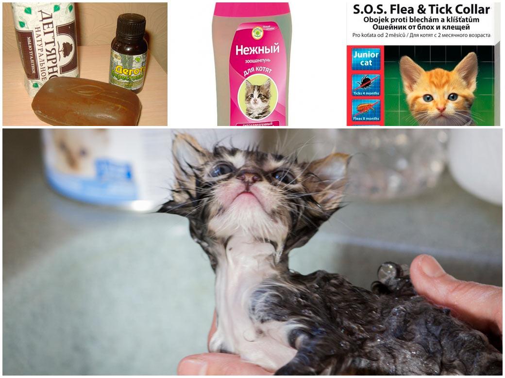 Народные средства защиты от блох у кошек