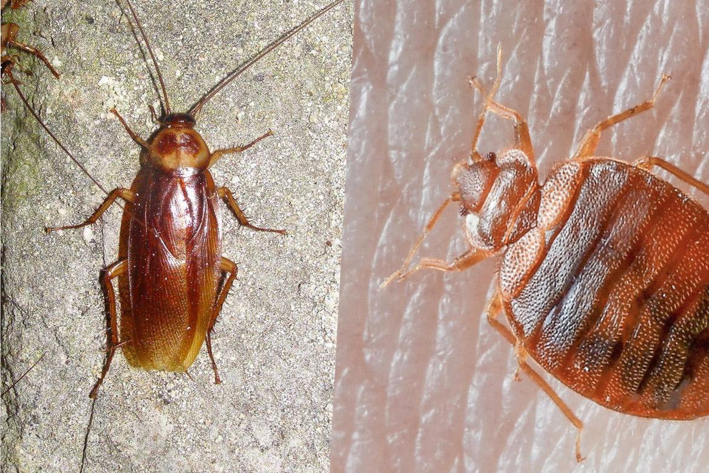Тараканы: что едят, что любят больше всего
