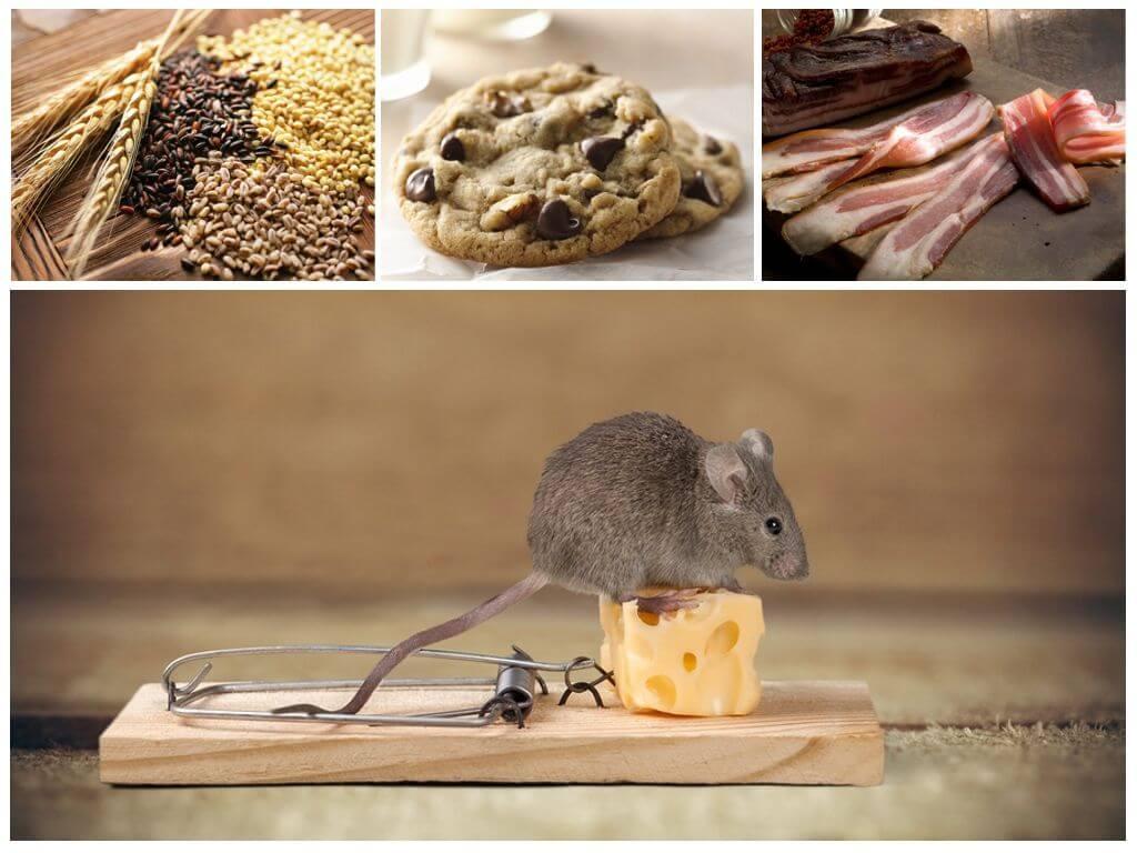 Приманка для мышей в мышеловку — (советы обывателей)