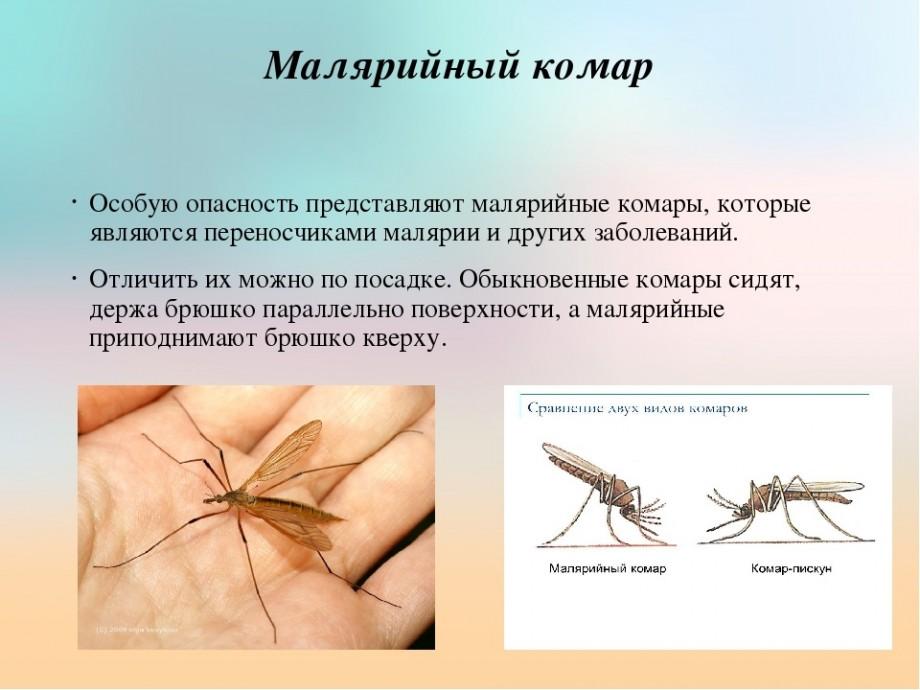 Сколько живут комары и что влияет на длительность их жизни