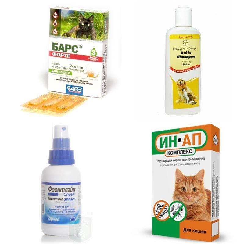 Власоеды у кошек и котов, как лечить в домашних условиях, какие средства выбрать?