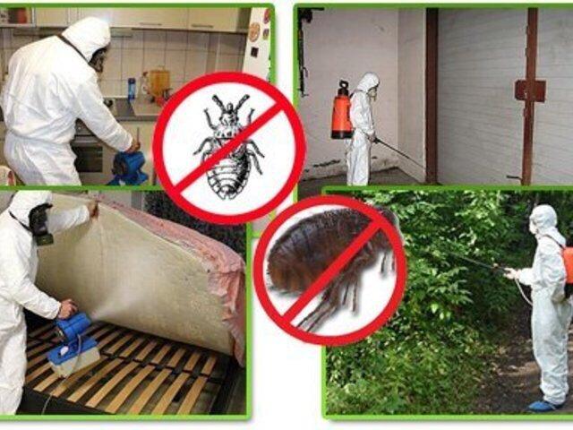 Дератизация: что это, какими способами исредствами проводится уничтожение грызунов, правила обработки квартиры + отзывы
