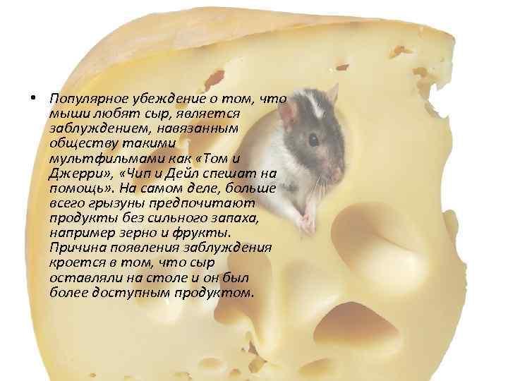 Что едят домашние крысы?