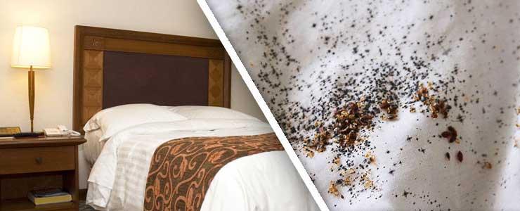 Приснились клопы: что может означать такой сон, к чему снятся клопы в квартире или постели согласно соннику?