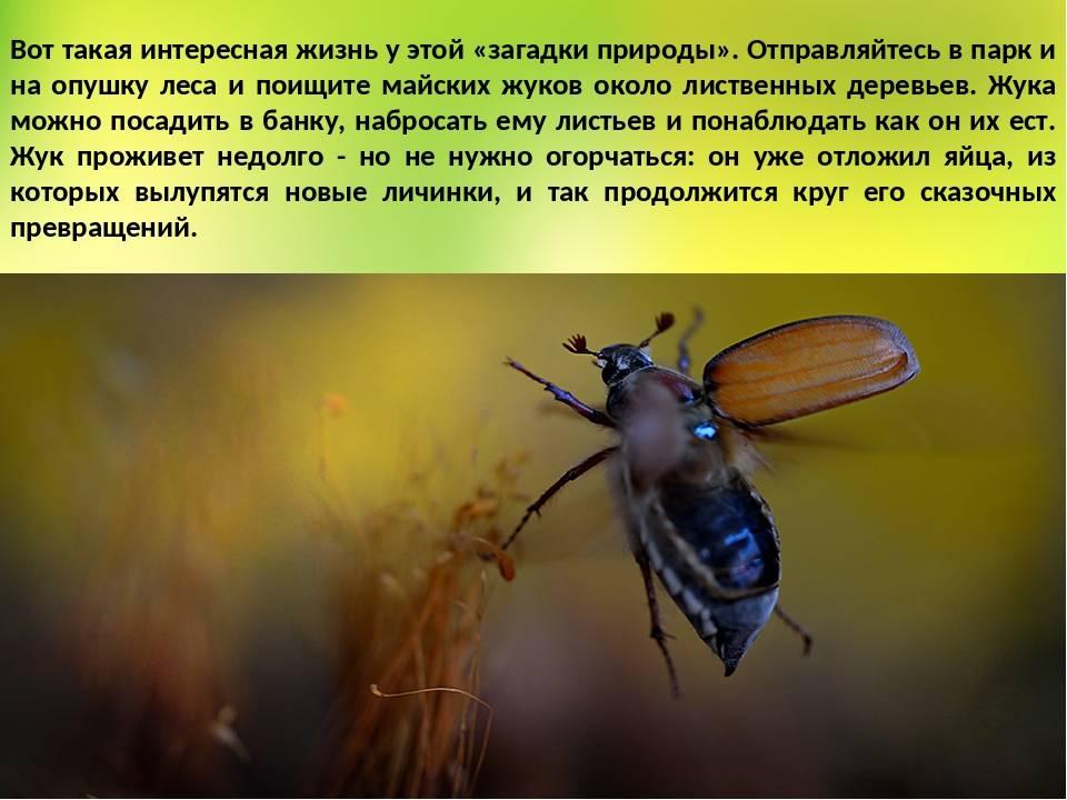 К чему снится  жук во сне — по 90 сонникам! если видишь во сне жук что значит?