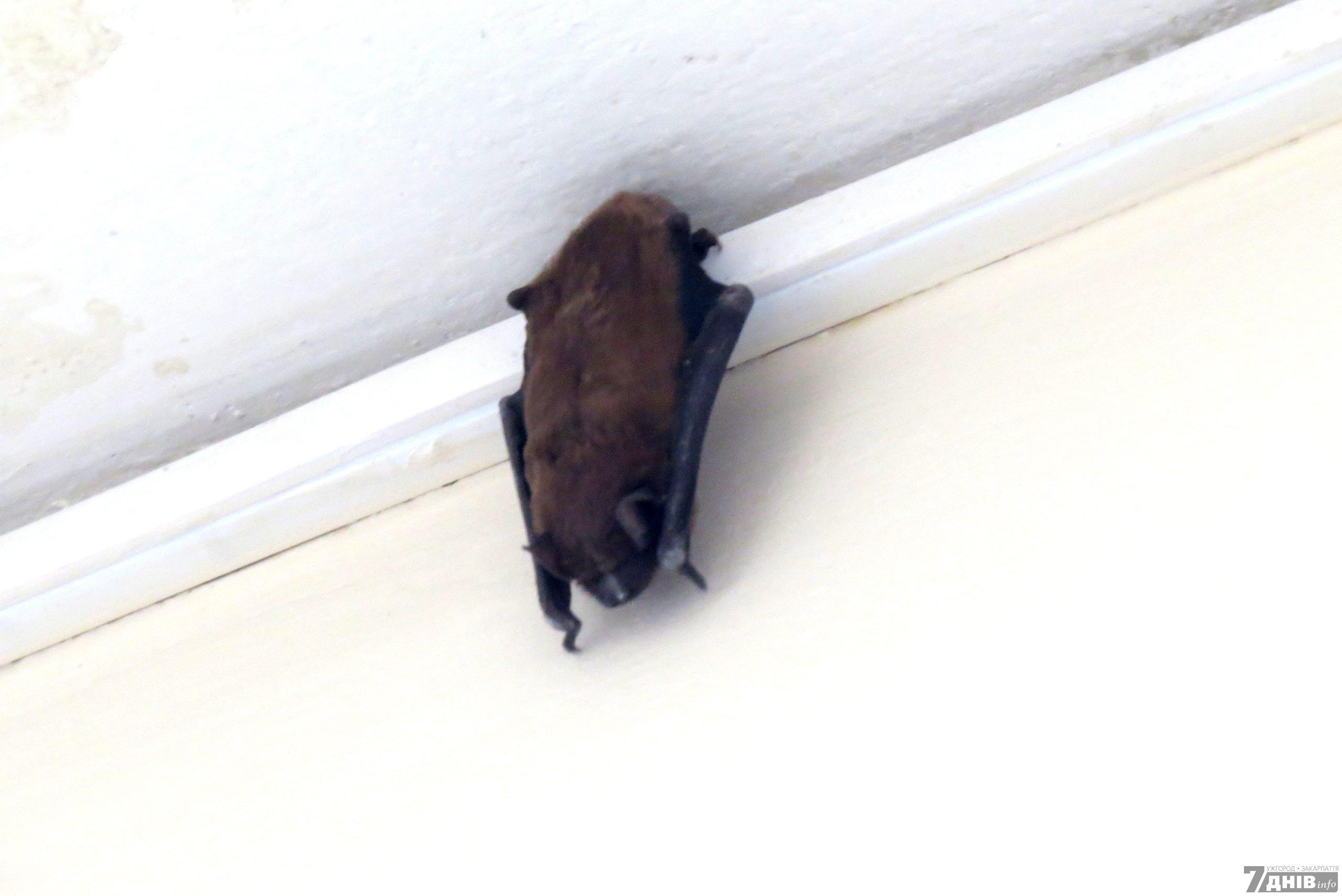 Как избавиться от мышей под натяжным потолком
