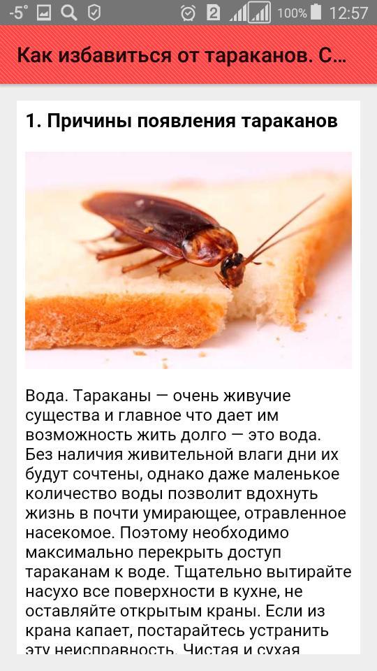 Как избавиться от тараканов из квартиры: химические средства, ловушки и народные методы