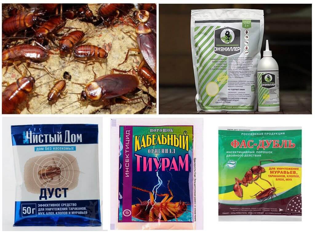 Дуст от тараканов: инструкция по применению, вреден ли для человека?