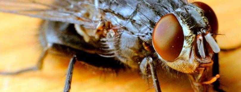 Почему мухи кусаются в августе: все ответы на вопрос, способы защиты и профилактика