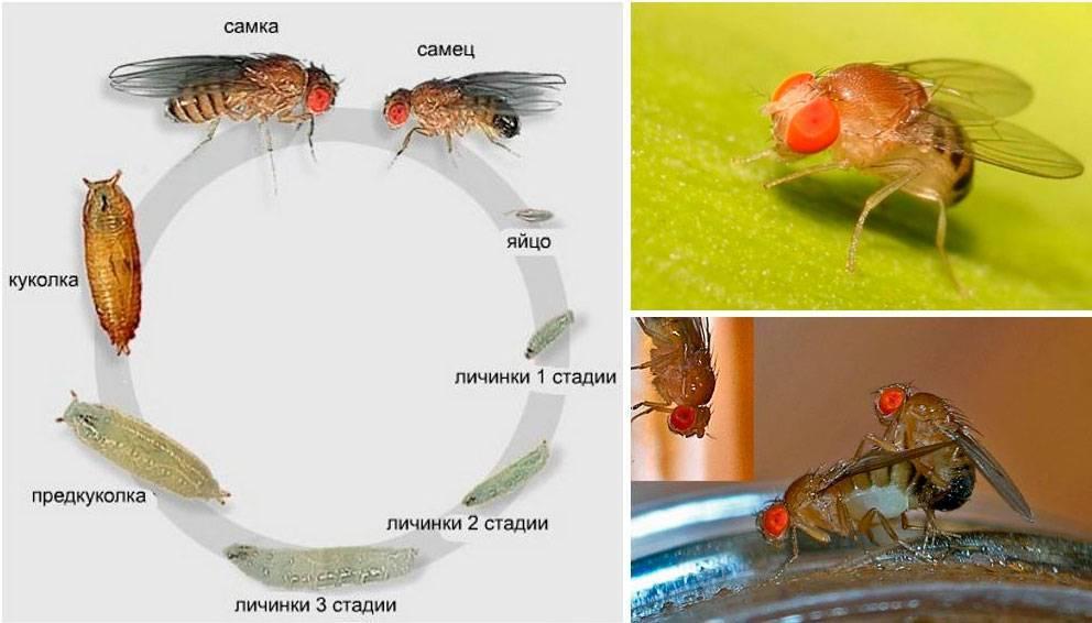 Почему в квартире появляются мухи и что с этим делать