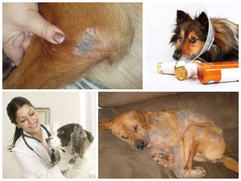 Чем и как обработать уши собаке от мух