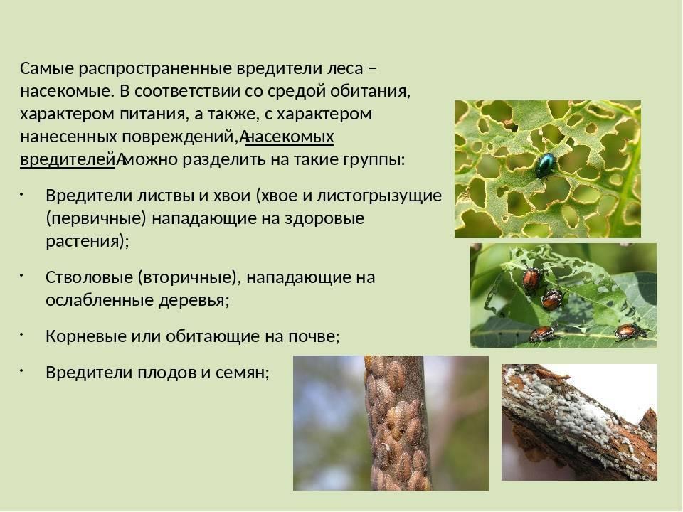 Большие комары: кусаются или нет долгоножки с большими ногами
