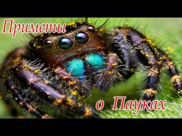 Увидеть паука в доме или на улице: что означает данная примета