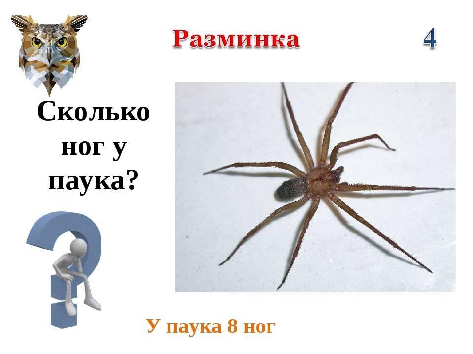 Сколько ног у паука и клеща: в чем различия между этими животными, образ жизни и функция в экосистеме