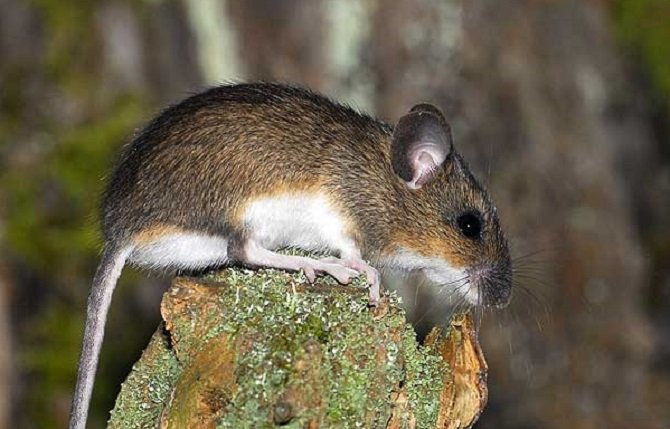 Летучая мышь