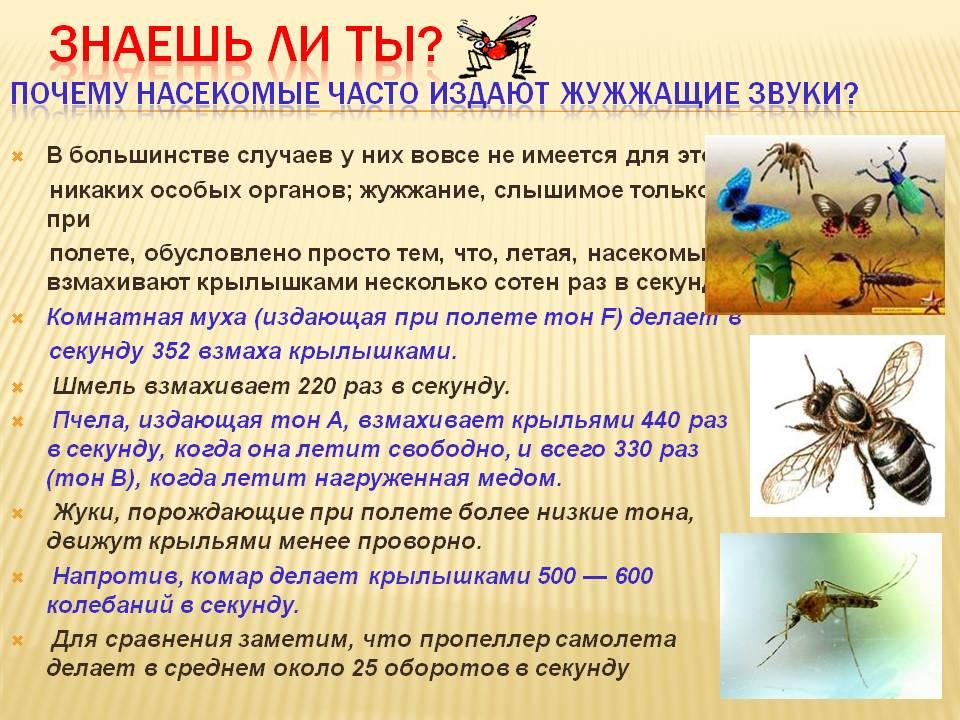 Почему комар пищит, а шмель жужжит - педагогика
