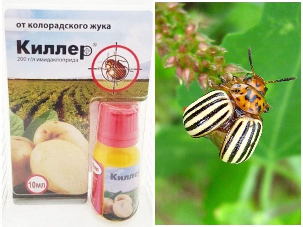 Престиж от колорадского жука - инструкция по применению, как и когда обрабатывать