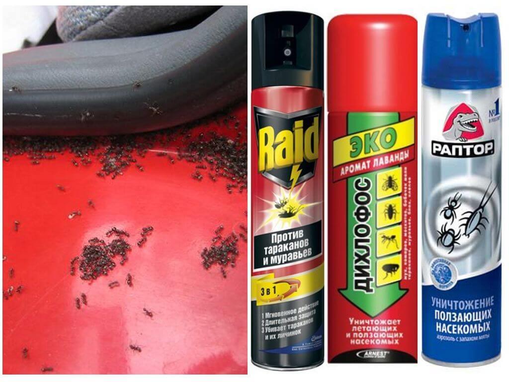 Что делать, если завелись муравьи в машине