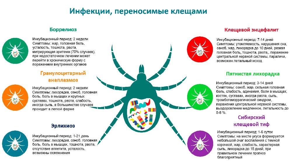 Энцефалит клещевой: признаки, виды и симптомы