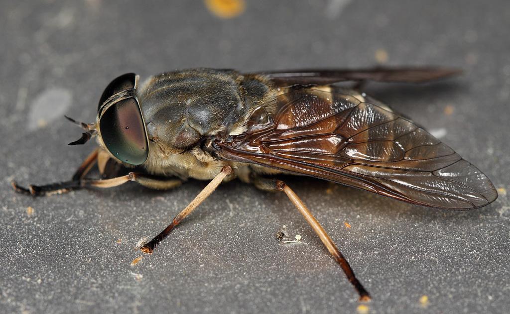 Самые опасные насекомые в россии – список, названия, описание, фото и видео