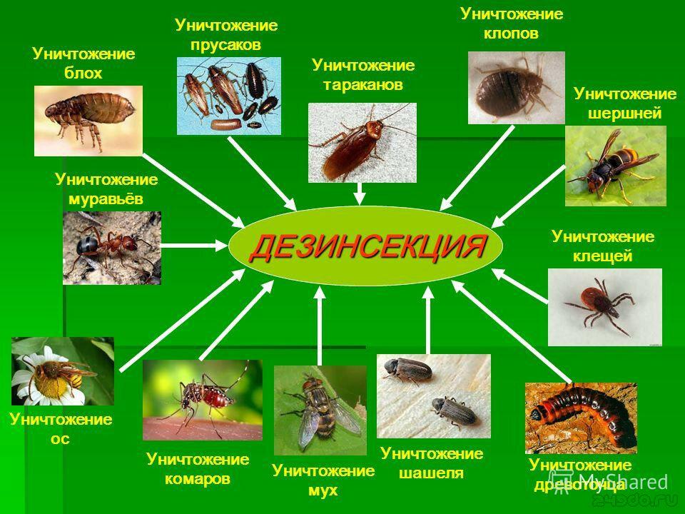 Как избавиться от тараканов: эффективные способы против насекомых, чем вывести их в квартире