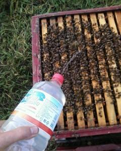 Обработка пчел: применяем бипин т