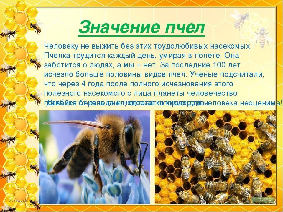 Породы пчел, их характеристики и описание с фото и видео | россельхоз.рф