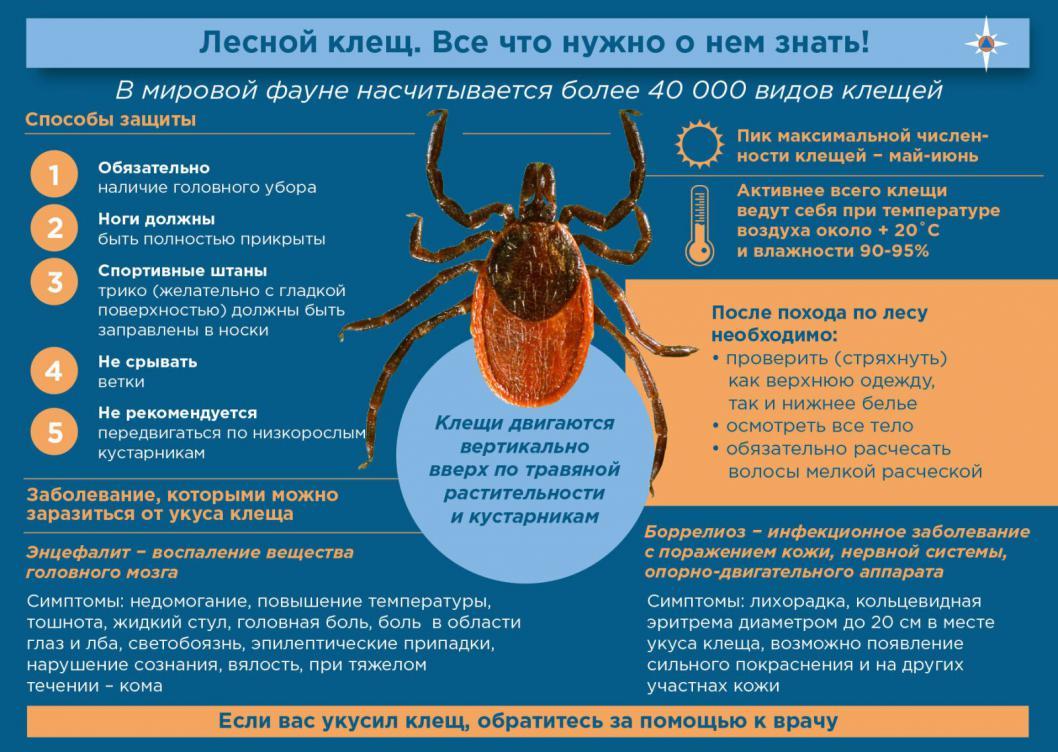 Иксодовые клещи, какие клещи опасны и как они заражают человека