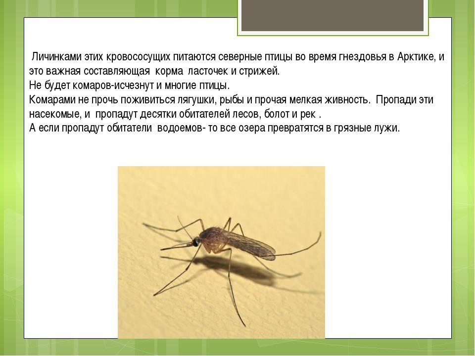 Зачем комары пьют кровь человека и что делают дальше