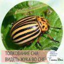Как понять, к чему снится майский жук